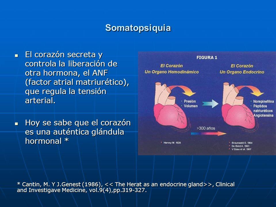 Somatopsiquia El corazón secreta y controla la liberación de otra hormona, el ANF (factor atrial matriurético), que regula la tensión arterial. El cor