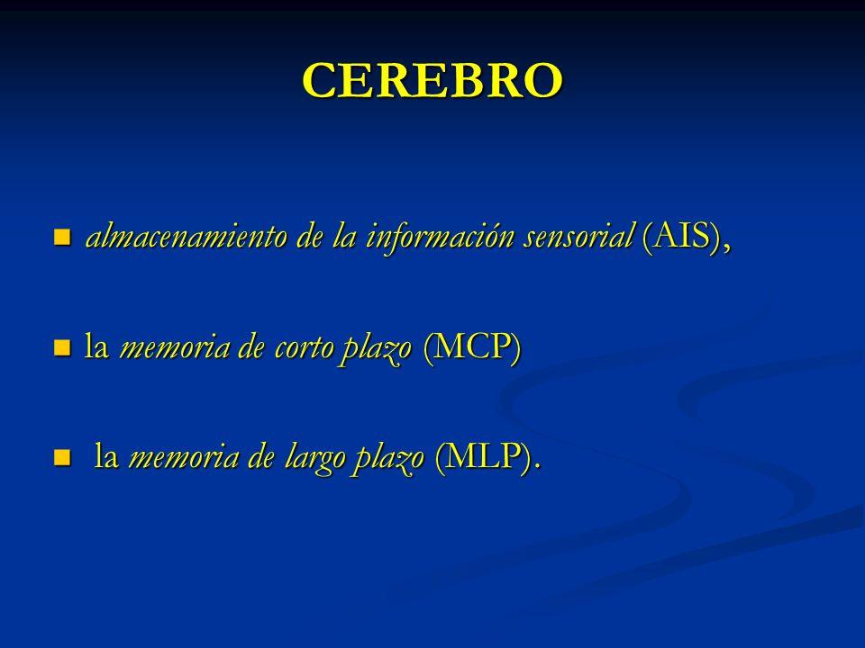 CEREBRO almacenamiento de la información sensorial (AIS), almacenamiento de la información sensorial (AIS), la memoria de corto plazo (MCP) la memoria