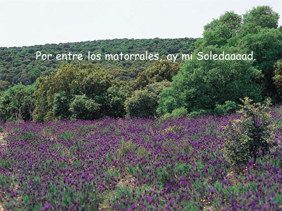 Soledaaad, es tan bella como una palomaaa y tan clara como el sol que asomaaa,