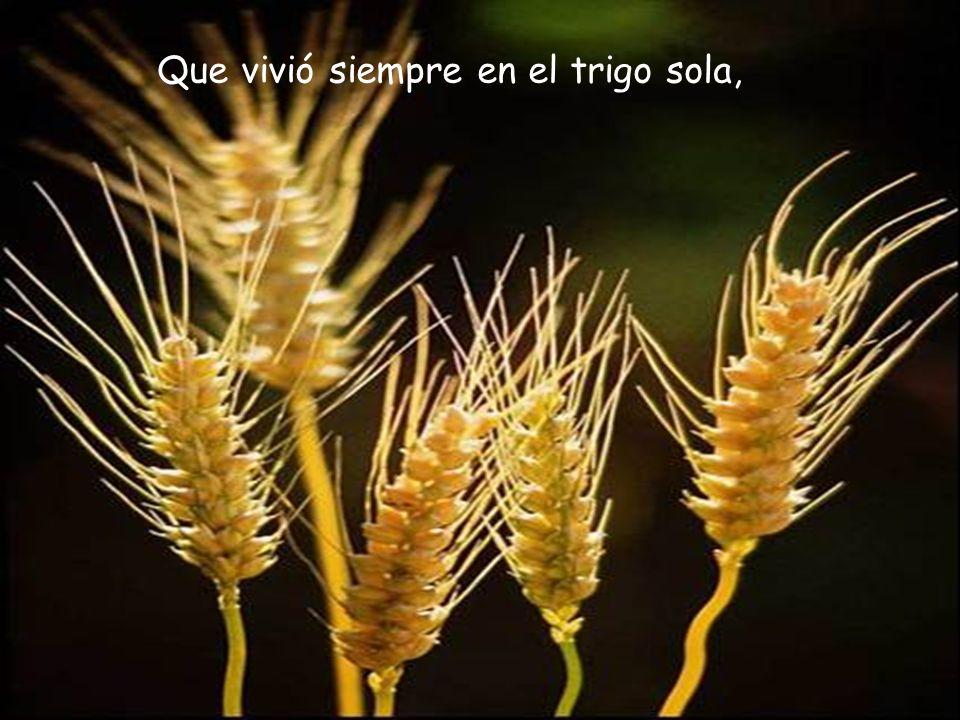 Que vivió siempre en el trigo sola,