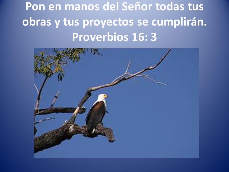 Pon en manos del Señor todas tus obras y tus proyectos se cumplirán. Proverbios 16: 3