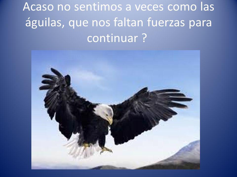 Acaso no sentimos a veces como las águilas, que nos faltan fuerzas para continuar ?