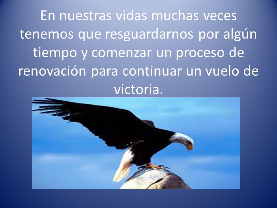 En nuestras vidas muchas veces tenemos que resguardarnos por algún tiempo y comenzar un proceso de renovación para continuar un vuelo de victoria.