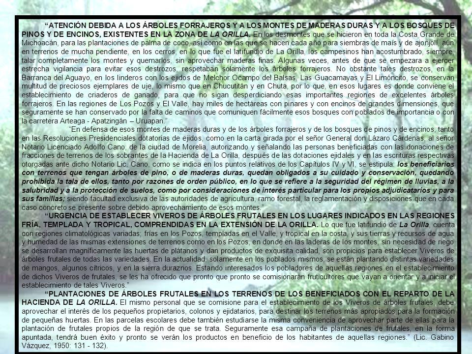 NECESIDAD DE INDUSTRIALIZAR LA COPRA EN LA PROPIA ZONA. De los datos de producción de palmeras de coco de agua y del coquito de aceite que se recoge d