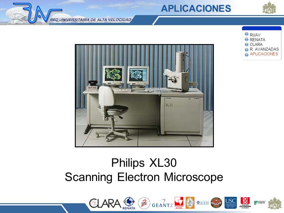 Philips XL30 Scanning Electron Microscope APLICACIONES RUAV RENATA CLARA R. AVANZADAS APLICACIONES