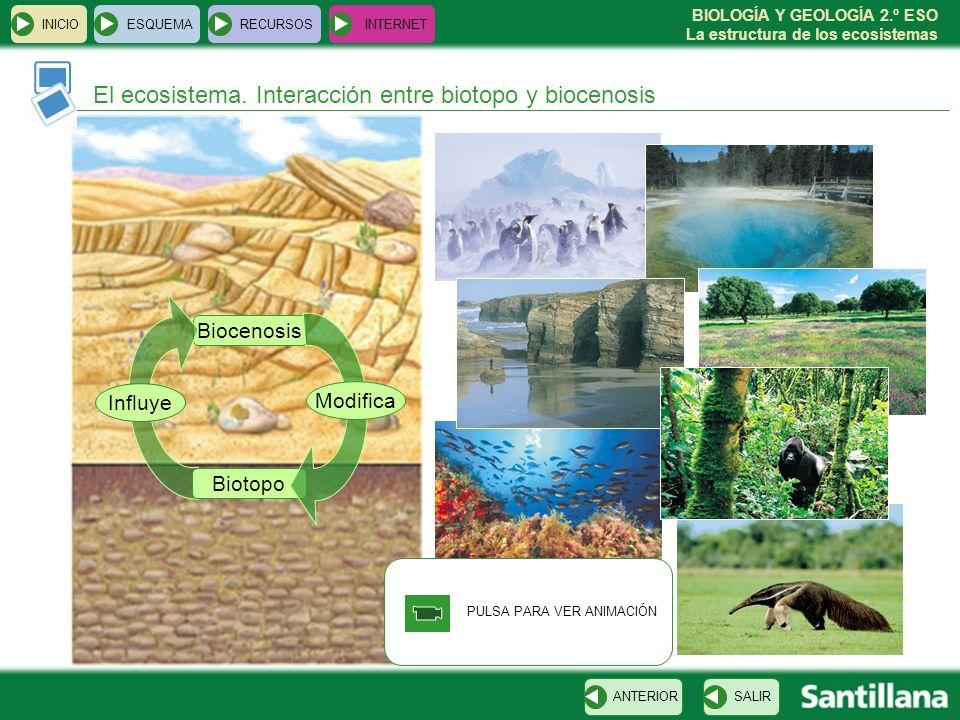 BIOLOGÍA Y GEOLOGÍA 2.º ESO La estructura de los ecosistemas PULSA PARA VER ANIMACIÓN INICIOESQUEMARECURSOSINTERNET El ecosistema. Interacción entre b