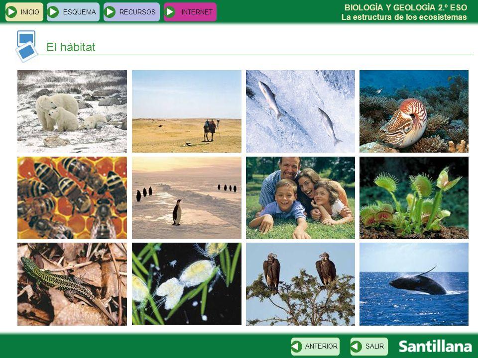 BIOLOGÍA Y GEOLOGÍA 2.º ESO La estructura de los ecosistemas INICIOESQUEMARECURSOSINTERNET El hábitat SALIRANTERIOR
