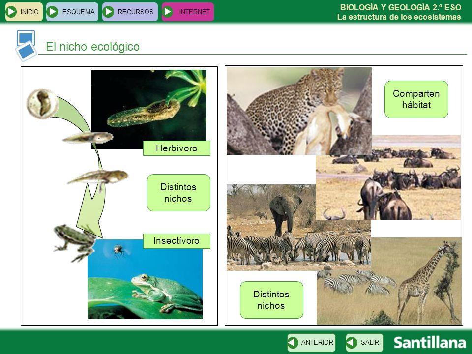 BIOLOGÍA Y GEOLOGÍA 2.º ESO La estructura de los ecosistemas INICIOESQUEMARECURSOSINTERNET El nicho ecológico SALIRANTERIOR Herbívoro Insectívoro Dist