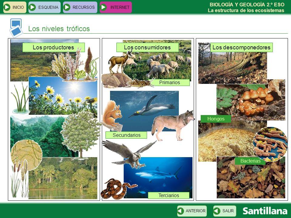 BIOLOGÍA Y GEOLOGÍA 2.º ESO La estructura de los ecosistemas Los niveles tróficos INICIOESQUEMARECURSOSINTERNET SALIRANTERIOR Los productoresLos consu