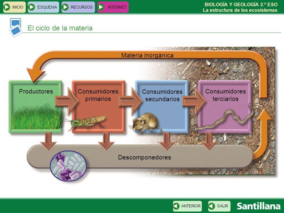 BIOLOGÍA Y GEOLOGÍA 2.º ESO La estructura de los ecosistemas El ciclo de la materia INICIOESQUEMARECURSOSINTERNET SALIRANTERIOR ProductoresConsumidore