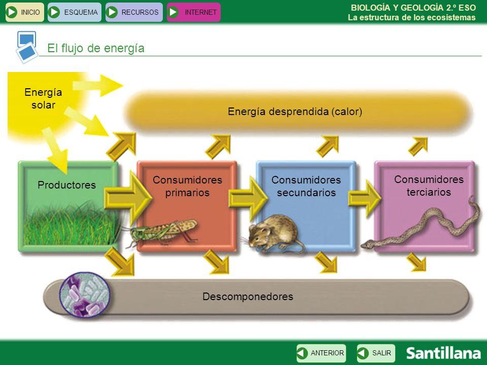 BIOLOGÍA Y GEOLOGÍA 2.º ESO La estructura de los ecosistemas El flujo de energía INICIOESQUEMARECURSOSINTERNET SALIRANTERIOR Productores Consumidores