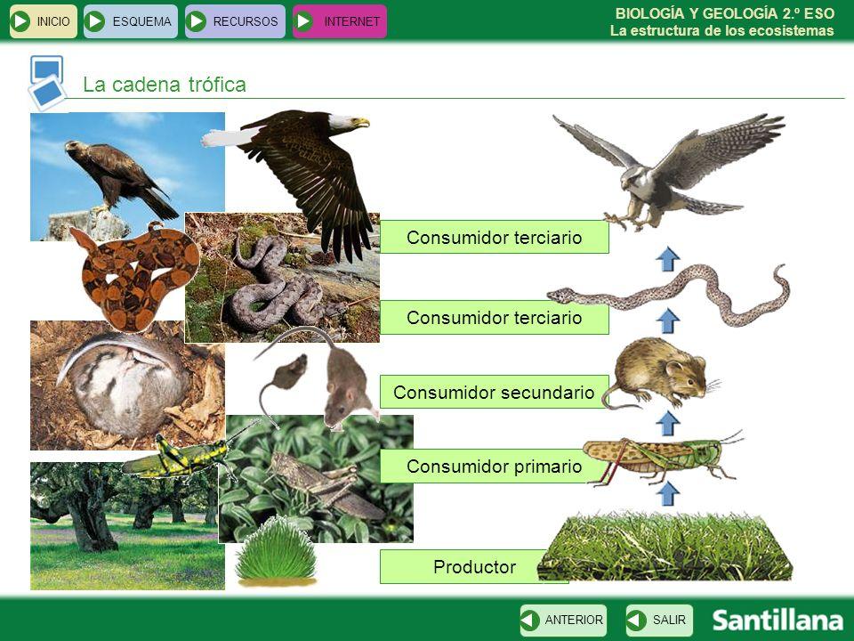 BIOLOGÍA Y GEOLOGÍA 2.º ESO La estructura de los ecosistemas Productor Consumidor primario Consumidor secundario Consumidor terciario INICIOESQUEMAREC