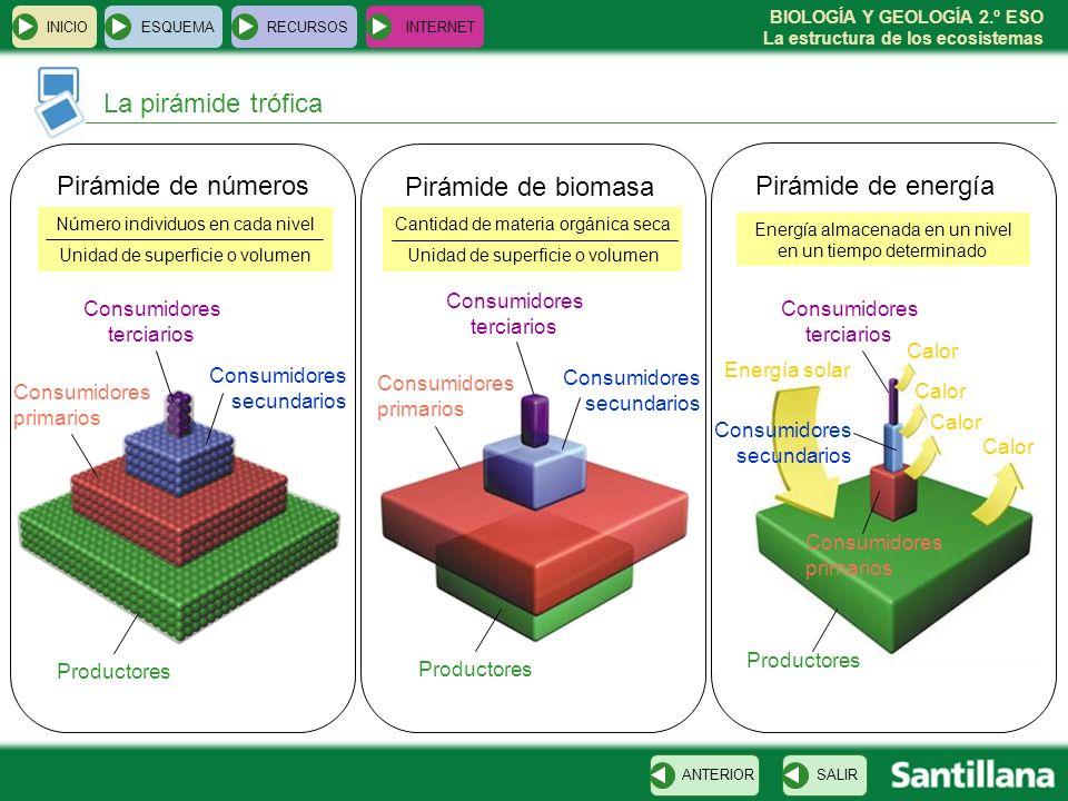 BIOLOGÍA Y GEOLOGÍA 2.º ESO La estructura de los ecosistemas INICIOESQUEMARECURSOSINTERNET La pirámide trófica SALIRANTERIOR Productores Consumidores