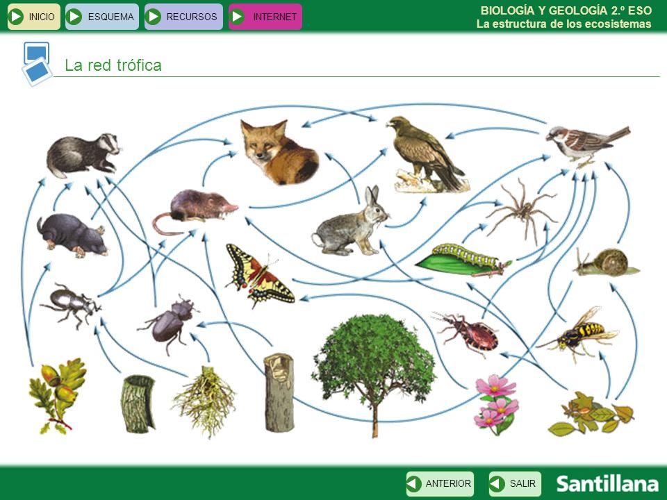 BIOLOGÍA Y GEOLOGÍA 2.º ESO La estructura de los ecosistemas INICIOESQUEMARECURSOSINTERNET La red trófica SALIRANTERIOR