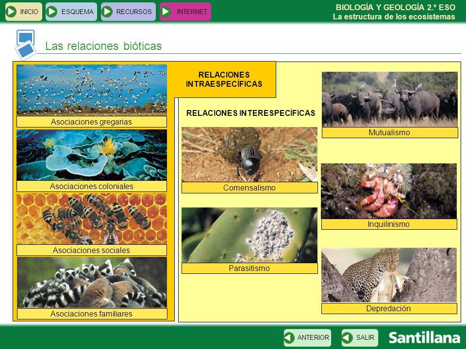 BIOLOGÍA Y GEOLOGÍA 2.º ESO La estructura de los ecosistemas INICIOESQUEMARECURSOSINTERNET Las relaciones bióticas SALIRANTERIOR Asociaciones gregaria