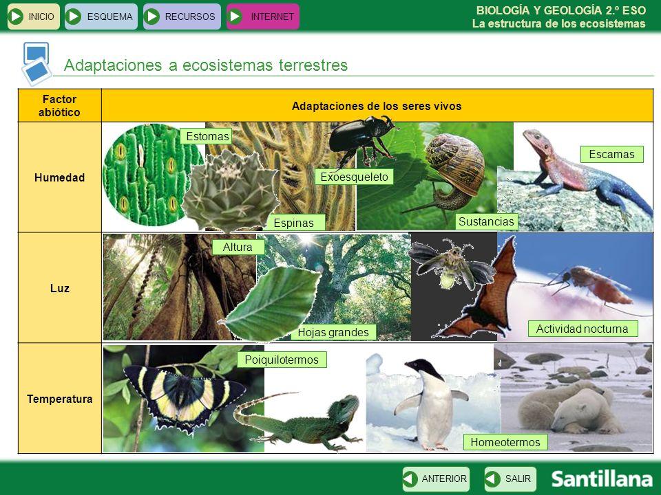 BIOLOGÍA Y GEOLOGÍA 2.º ESO La estructura de los ecosistemas Hojas grandes Espinas INICIOESQUEMARECURSOSINTERNET Adaptaciones a ecosistemas terrestres
