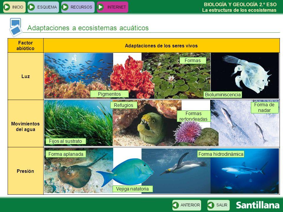 BIOLOGÍA Y GEOLOGÍA 2.º ESO La estructura de los ecosistemas INICIOESQUEMARECURSOSINTERNET Adaptaciones a ecosistemas acuáticos SALIRANTERIOR Factor a