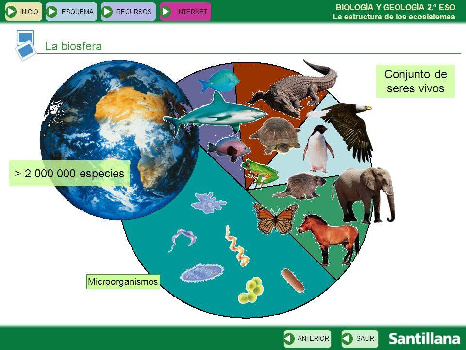 BIOLOGÍA Y GEOLOGÍA 2.º ESO La estructura de los ecosistemas La biosfera INICIOESQUEMARECURSOSINTERNET SALIRANTERIOR > 2 000 000 especies Microorganis