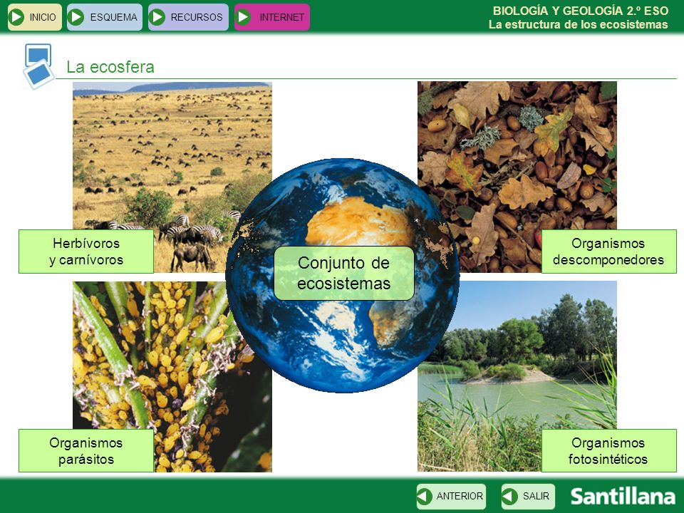 BIOLOGÍA Y GEOLOGÍA 2.º ESO La estructura de los ecosistemas La ecosfera INICIOESQUEMARECURSOSINTERNET SALIRANTERIOR Conjunto de ecosistemas Organismo