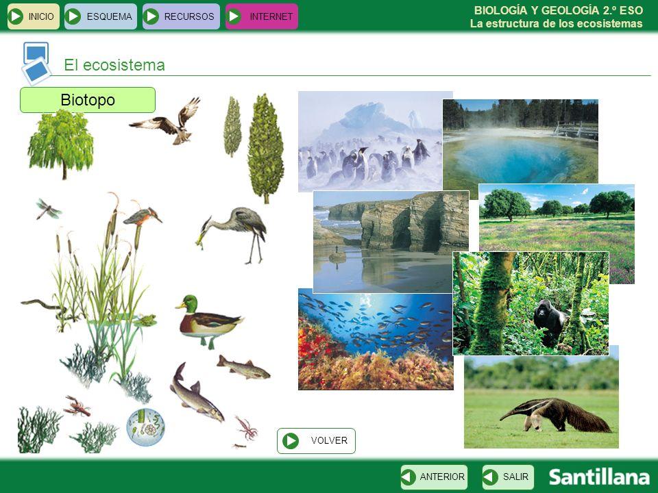 BIOLOGÍA Y GEOLOGÍA 2.º ESO La estructura de los ecosistemas Biotopo INICIOESQUEMARECURSOSINTERNET El ecosistema SALIRANTERIOR VOLVER