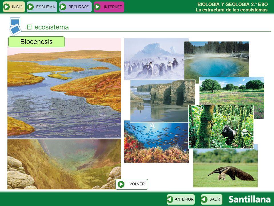 BIOLOGÍA Y GEOLOGÍA 2.º ESO La estructura de los ecosistemas INICIOESQUEMARECURSOSINTERNET El ecosistema SALIRANTERIOR Biocenosis VOLVER