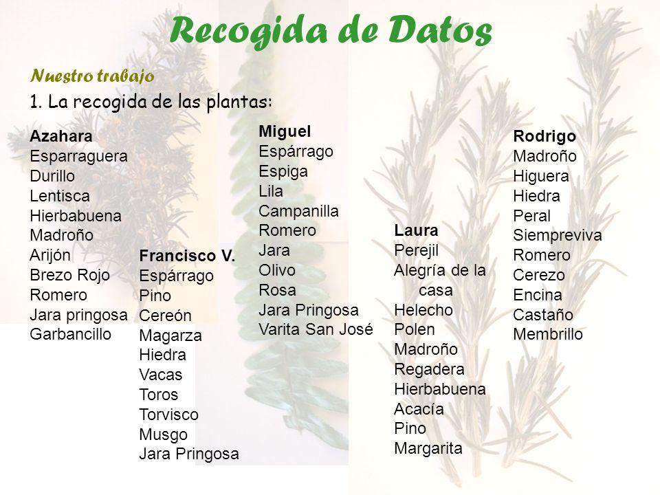 Recogida de Datos Nuestro trabajo 1. La recogida de las plantas: Azahara Esparraguera Durillo Lentisca Hierbabuena Madroño Arijón Brezo Rojo Romero Ja