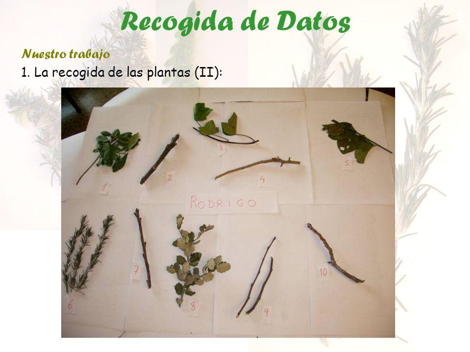Recogida de Datos Nuestro trabajo 1. La recogida de las plantas (III):