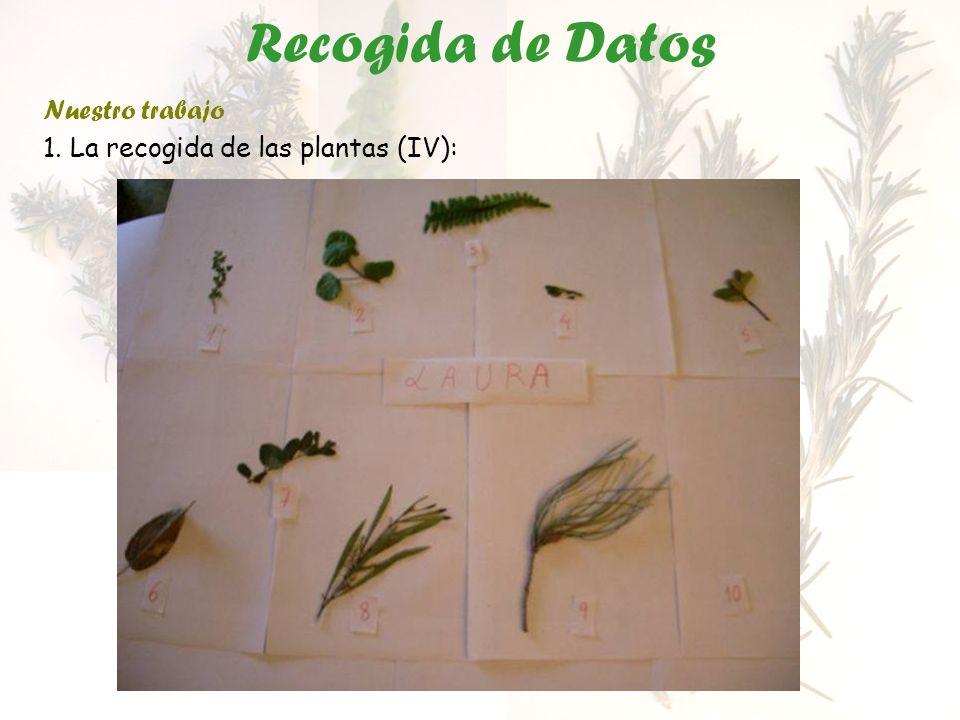 Recogida de Datos Nuestro trabajo 1. La recogida de las plantas (IV):
