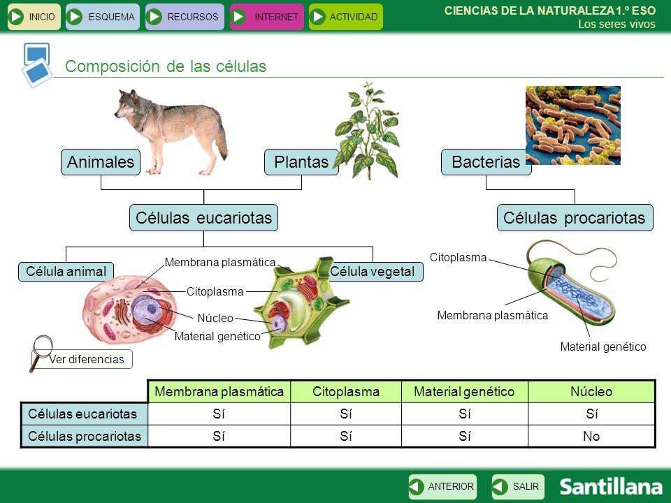 Célula vegetal Bacterias INICIOESQUEMARECURSOSINTERNETACTIVIDAD Composición de las células SALIRANTERIOR CIENCIAS DE LA NATURALEZA 1.º ESO Los seres v