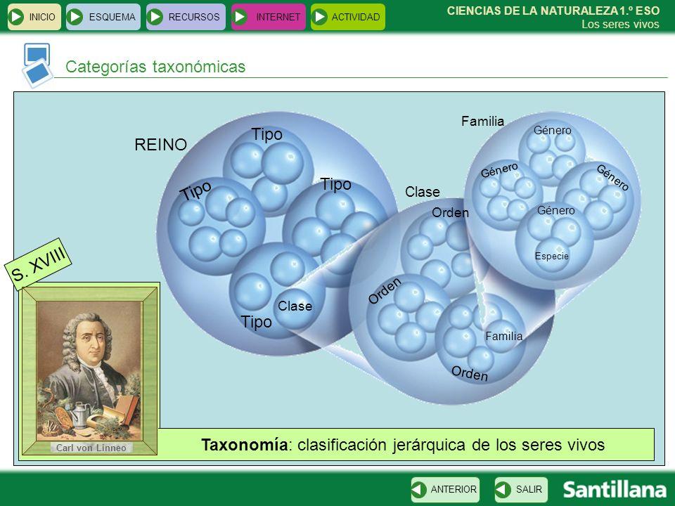 Categorías taxonómicas INICIOESQUEMARECURSOSINTERNETACTIVIDAD SALIRANTERIOR CIENCIAS DE LA NATURALEZA 1.º ESO Los seres vivos S. XVIII Taxonomía: clas
