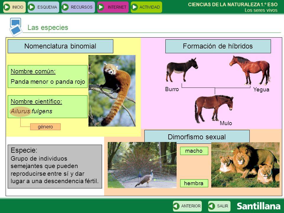 INICIOESQUEMARECURSOSINTERNETACTIVIDAD Las especies SALIRANTERIOR CIENCIAS DE LA NATURALEZA 1.º ESO Los seres vivos Dimorfismo sexual Formación de híb