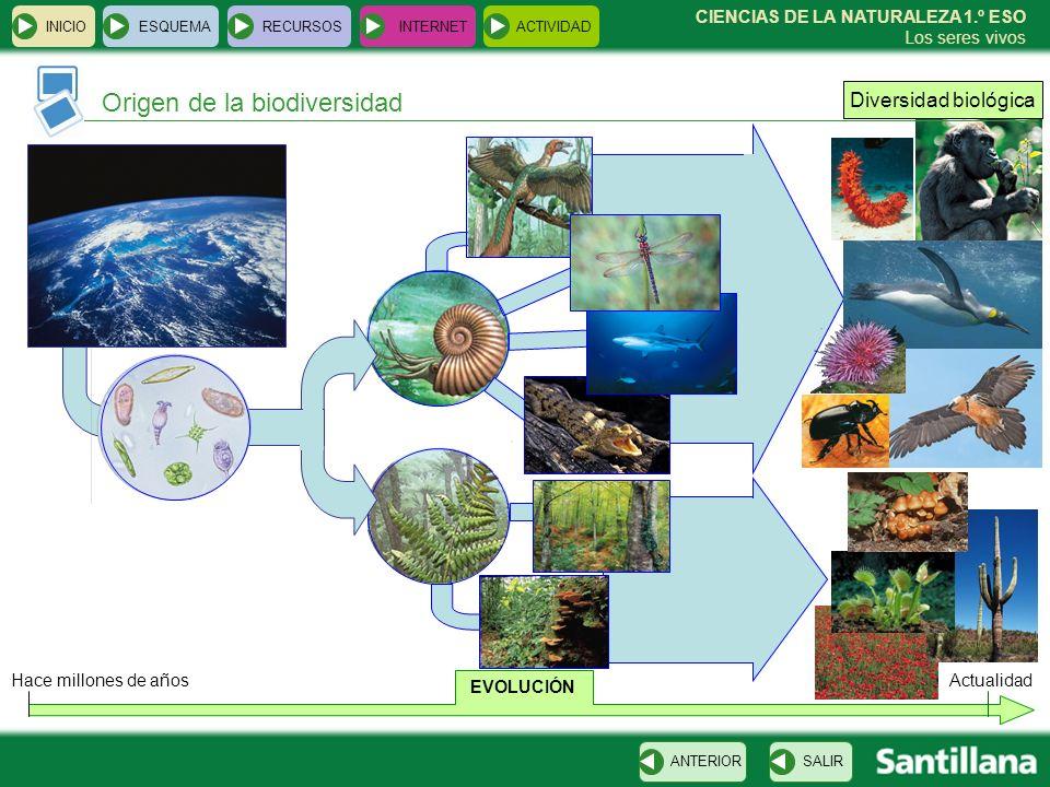 INICIOESQUEMARECURSOSINTERNETACTIVIDAD Origen de la biodiversidad SALIRANTERIOR CIENCIAS DE LA NATURALEZA 1.º ESO Los seres vivos Hace millones de año
