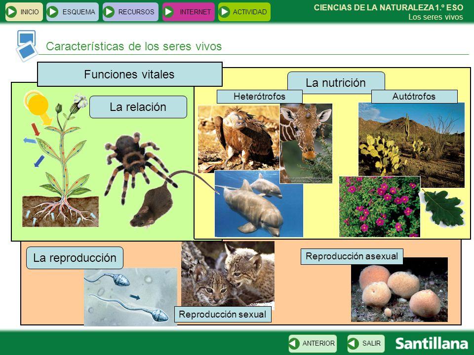 Características de los seres vivos INICIOESQUEMARECURSOSINTERNETACTIVIDAD SALIRANTERIOR CIENCIAS DE LA NATURALEZA 1.º ESO Los seres vivos Funciones vi
