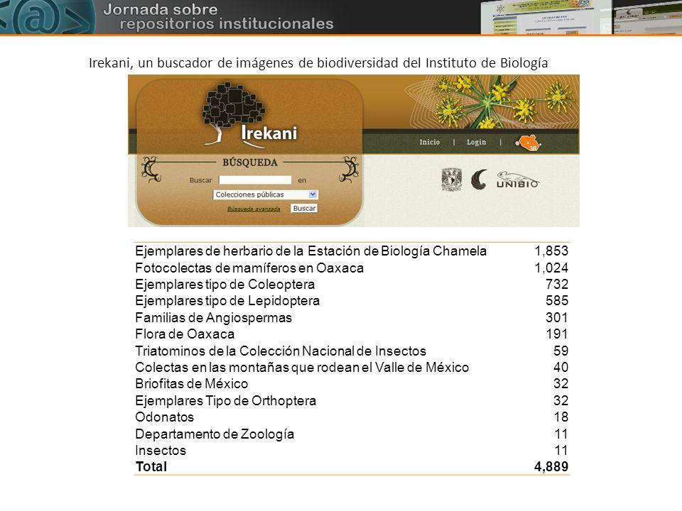 Ejemplares de herbario de la Estación de Biología Chamela1,853 Fotocolectas de mamíferos en Oaxaca1,024 Ejemplares tipo de Coleoptera732 Ejemplares ti