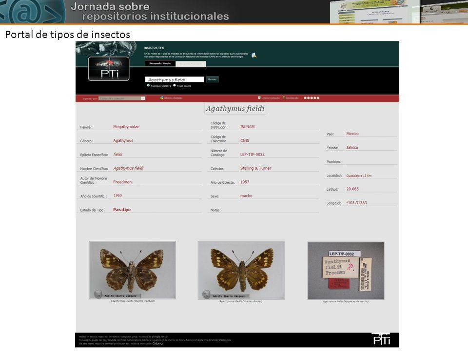 Portal de tipos de insectos Agathymus fieldi