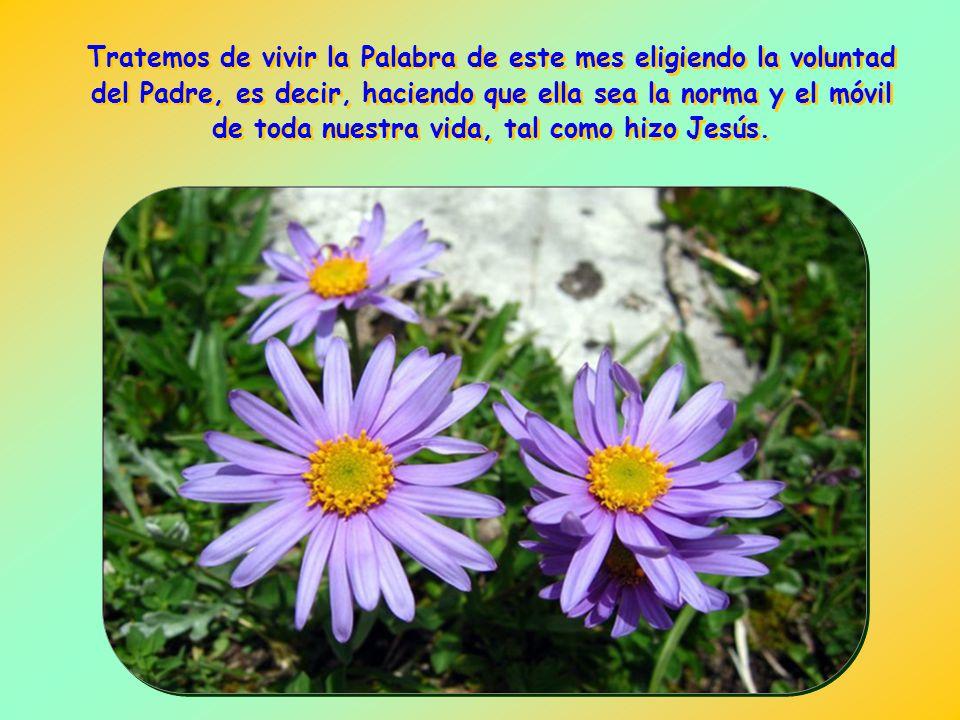 Ahora bien, a esta cultura que se apoya en la búsqueda de la propia voluntad se le contrapone la de Jesús, orientada por completo hacia el cumplimient