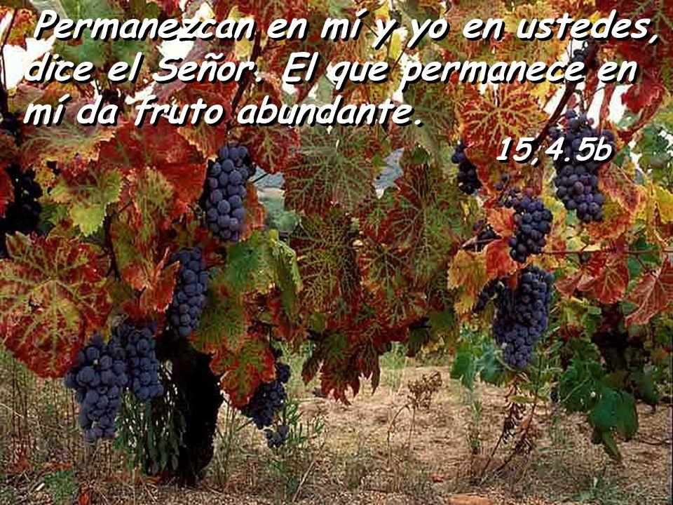 Quien permanece en mí, da mucho fruto