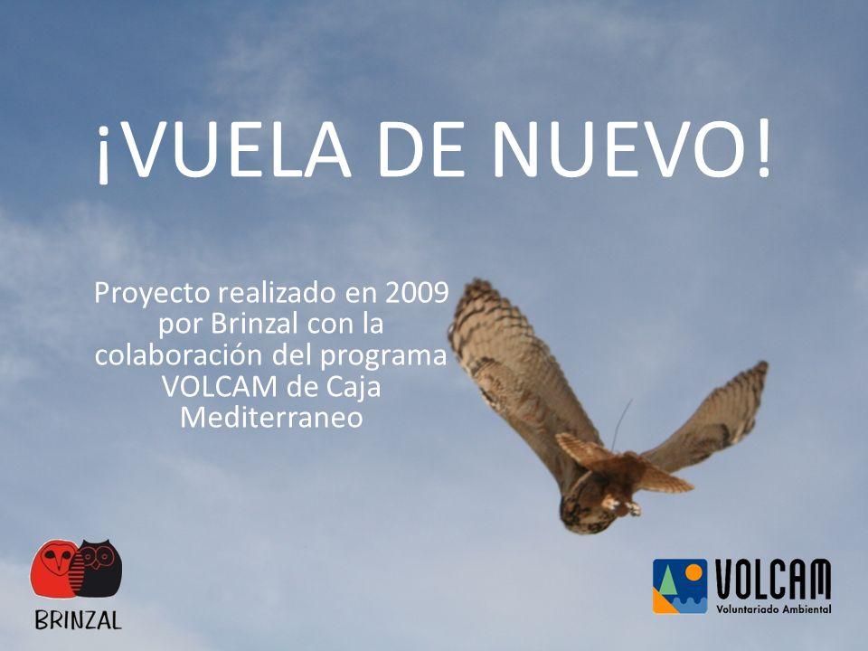 ¡VUELA DE NUEVO! Proyecto realizado en 2009 por Brinzal con la colaboración del programa VOLCAM de Caja Mediterraneo
