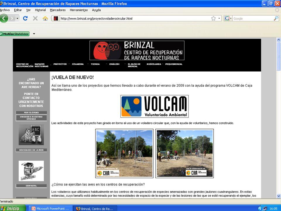 El proyecto ¡Vuela de nuevo! Actividades para exportar la idea a otros proyectos 3. Creación de página en Internet http://www.brinzal.org/proyectovola