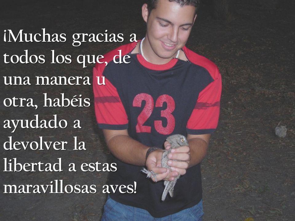 ¡Muchas gracias a todos los que, de una manera u otra, habéis ayudado a devolver la libertad a estas maravillosas aves!