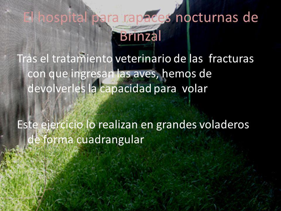 El hospital para rapaces nocturnas de Brinzal Pero en ocasiones, la gravedad de las fracturas o el tipo de vuelo de la especie haría necesario un espacio mucho mayor Una solución es el uso de un voladero con forma de donut, en el que las aves puedan volar sin fin