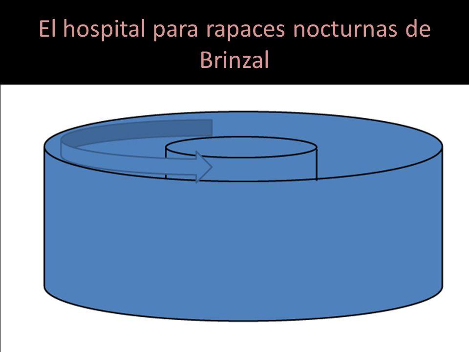 El hospital para rapaces nocturnas de Brinzal Pero en ocasiones, la gravedad de las fracturas o el tipo de vuelo de la especie haría necesario un espa