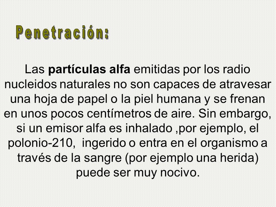 Las partículas alfa emitidas por los radio nucleidos naturales no son capaces de atravesar una hoja de papel o la piel humana y se frenan en unos poco