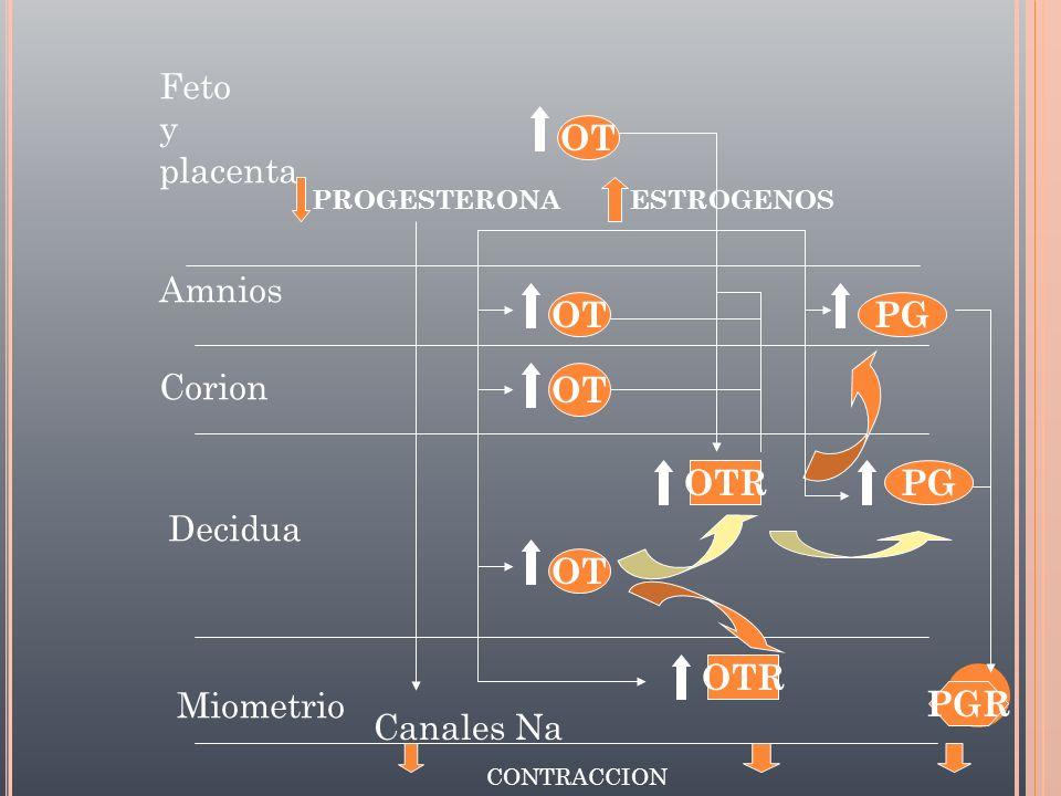 Expulsión Rotación Externa Deflexión Rotación Interna Descenso Encajamiento Flexión Movimientos Cardinales.