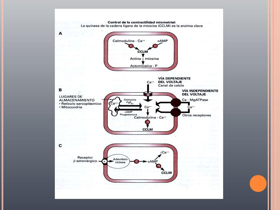 PRIMER PERÍODO fase activa 1a dilatación completa 2a expulsión del producto 3a expulsión de la placenta útero contraído fase latente Trabajo de parto activo aceleración de la dilatación.