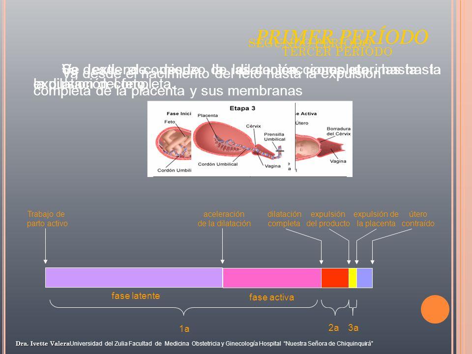 PRIMER PERÍODO fase activa 1a dilatación completa 2a expulsión del producto 3a expulsión de la placenta útero contraído fase latente Trabajo de parto
