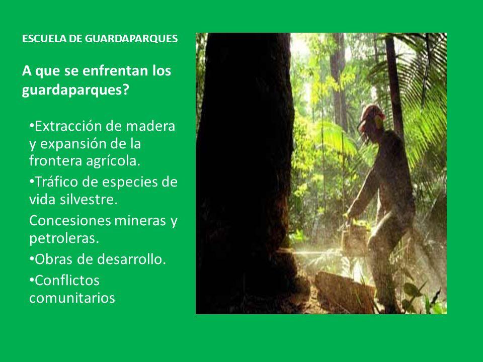 ESCUELA DE GUARDAPARQUES A que se enfrentan los guardaparques? Extracción de madera y expansión de la frontera agrícola. Tráfico de especies de vida s