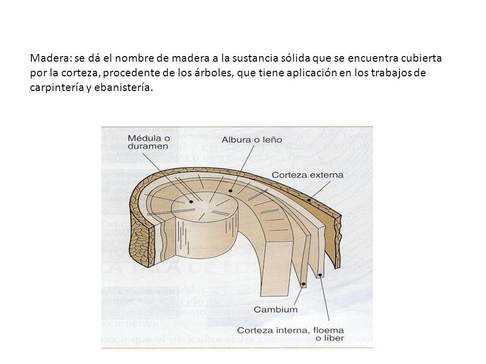 Madera: se dá el nombre de madera a la sustancia sólida que se encuentra cubierta por la corteza, procedente de los árboles, que tiene aplicación en l