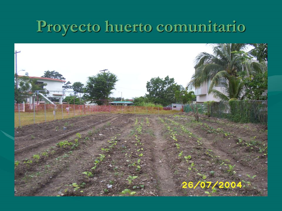 Proyecto huerto comunitario