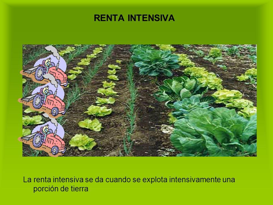 RENTA INTENSIVA La renta intensiva se da cuando se explota intensivamente una porción de tierra
